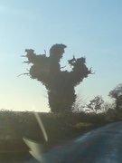 This is actually a tree!!!