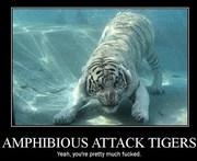 Amphibious Tigers