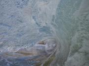 Shorey blur