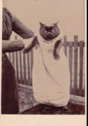 Victorian Photography Trends