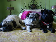 Truffle, Basil, & Violette