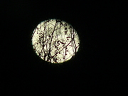 The Moon, from my window (5)