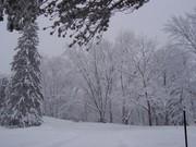 Jardin_zoologique_du_Québec_en_hiver_-_2006-02
