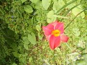 Around My Yard