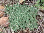 flower of life - plant