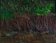 Braden River Mangroves