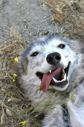 My 1st Wolf Hike (and Tibetan bowl sound bath)