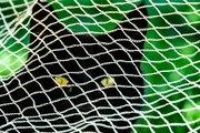 Vineyard cat