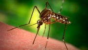 Mosquitoes rely on an anesthetic when they suck blood; wind companies rely on a silent press