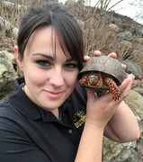 Eastern Box Turtle with Jax