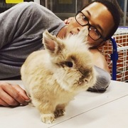 Simba the Lionhead Rabbit with Des