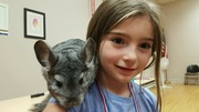 South American Chinchilla at Howland Public Library