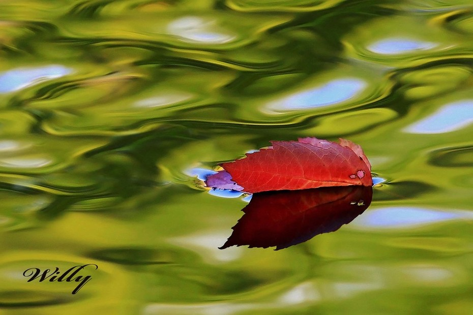 Leaf puts on one last show as it floats downstream in the Big Sable RIver
