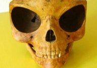 シーランドの頭がい骨:宇宙人の頭がい骨が見つかった!