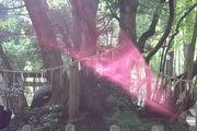 2013.10.30 京都の真名井神社のご神木前で不思議なピンクの光