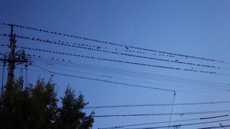 (2)鳥の花道
