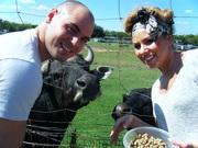 Feeding the Livestock