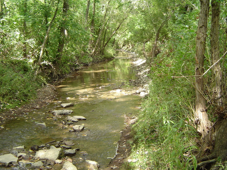 West Branch near Medina