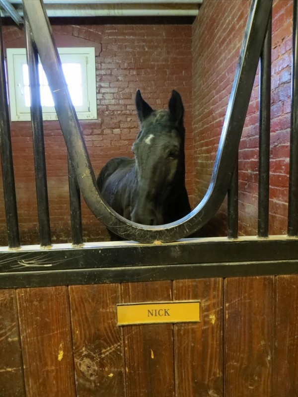 Nick, a horse who performs funerals with the Caisson Platoon.