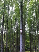 bird house in the woods