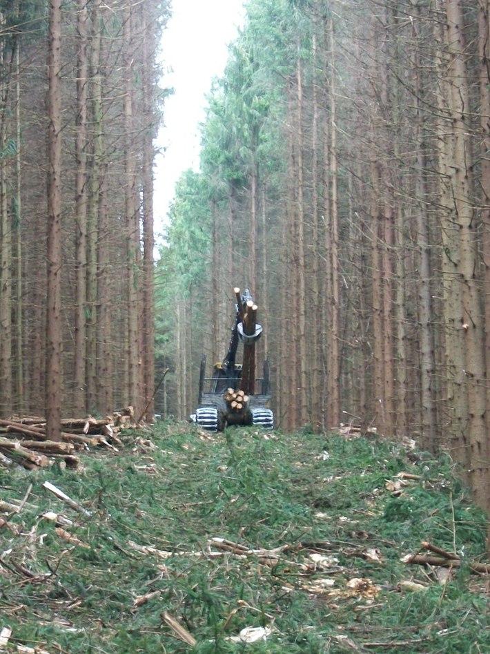 Access thinning, 60's era Norway spruce