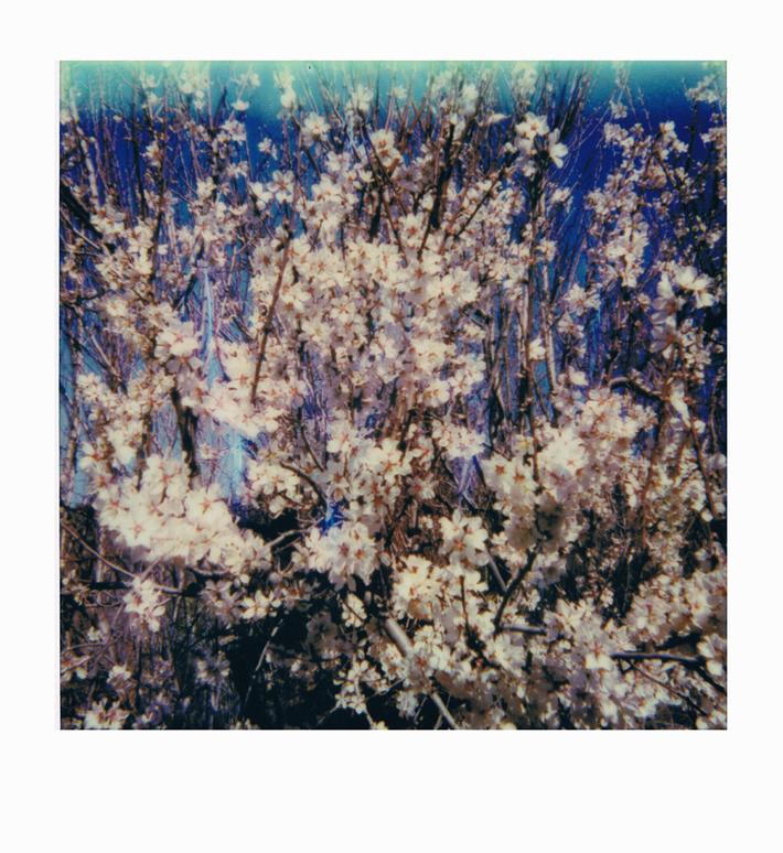 sentire primavera
