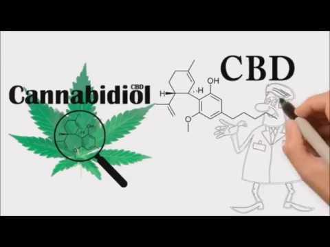 CBD Explained BUZZMEDIA257-BUZZEZEVIDEO CTFO-CBD-Cannabidiol-NON-THC-Health-Benefits-Endless