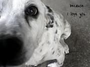 my dear dog, stony.