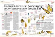 40 años de la mariposa monarca en Edomex