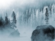 Winter_Forest +