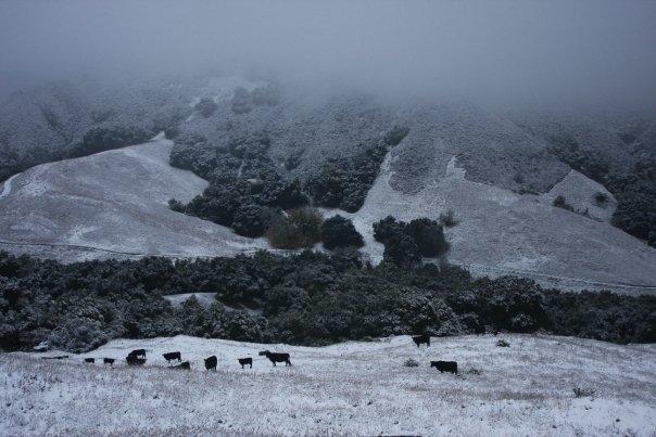 east_bay_snow3_dec7_2009