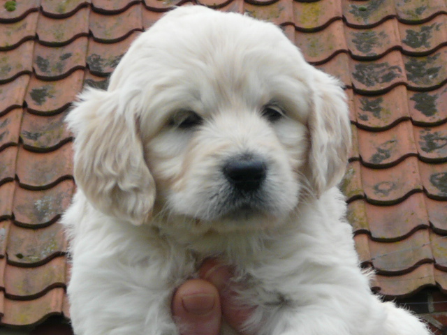 Andrea_puppy_5_weeks_019 (2)