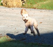 Look!  Paws and ears all in the air.  I LOVE my run.