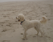oliver on the beach