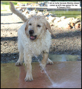 How to Clean Dirty-Doodle-Dogs