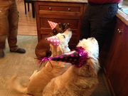Gracie's First Birthday Party on June 1st.