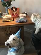 Pedro is 11 years old!