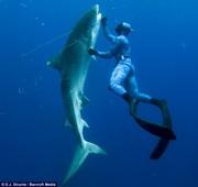 Denizens of the Deep