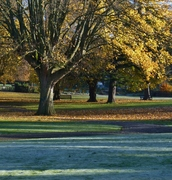 First winter frost, Nov 18th '12