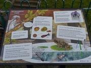 The Childrens' Nature Guide - Dec 3rd '12