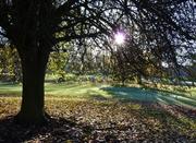 Last leaves on the Bird Cherry, Nov 18th, '12