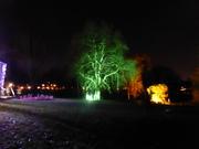 Carols In Park (15)