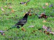 BirdW (76)