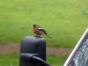 Bird Watch (12)