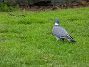 Bird Watch (9)