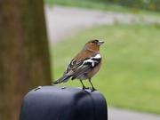 Bird Watch (14)