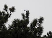 Bird Watch (5)