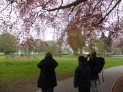 Bird Walk with Des 20 April 2014
