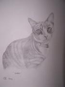 Libby my cat