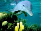 delfino1